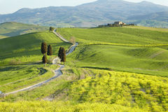 Countryside, San Quirico d´Orcia, Tuscany, Stock Image