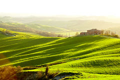 Countryside, San Quirico d´Orcia, Tuscany,. Italy Royalty Free Stock Image