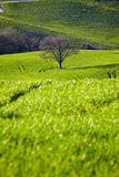 Countryside, San Quirico´Orcia , Tuscany, Stock Photo