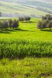 Countryside, San Quirico´Orcia , Tuscany, Royalty Free Stock Photos