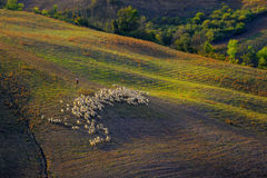 Countryside San Quirico  Orcia Tuscany, Italy Stock Image
