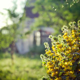 Countryside scene: old house in a garden, with flowers on the fo Royalty Free Stock Photos