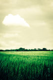 Countryside scenery. With a rainbow and cloudy weather Royalty Free Stock Photography