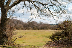 Countryside scenery. Wide angle view of a countryside meadow framed by trees Royalty Free Stock Photos