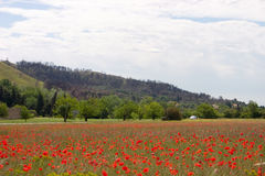 Countryside scenic. Field of red poppies, hills, highway, car and sky Royalty Free Stock Image