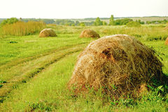 Countryside. several haystacks. Haystacks on the green field and a footpath Stock Photo