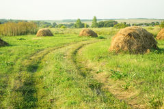Countryside. several haystacks. Haystacks on the green field and a footpath royalty free stock photography