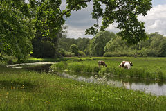 Countryside at Shugborough Royalty Free Stock Images