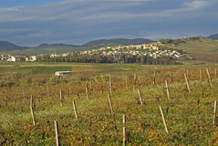 The countryside sicily. View of a wine plantation in sicilia around the hills royalty free stock photos
