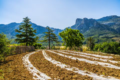 Countryside of Soller Royalty Free Stock Photo