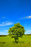 The countryside in springtime Royalty Free Stock Photography