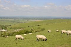Countryside at Steyning. Sussex. England. View from Truleigh Hill on the South Downs over Steyning. West Sussex. England. With sheep grazing Stock Photos