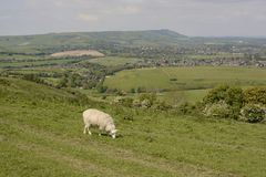 Countryside at Steyning. Sussex. England. View from Truleigh Hill on the South Downs over Steyning. West Sussex. England. With sheep grazing Royalty Free Stock Photography
