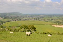 Countryside at Steyning. Sussex. England. View from Truleigh Hill on the South Downs over Steyning. West Sussex. England. With sheep grazing Stock Photo