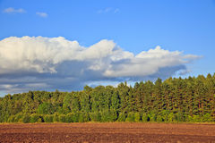Countryside at summer. Beautiful countryside at summer, Russia Stock Photography