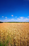 The countryside - summer Royalty Free Stock Image