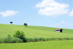 Countryside Summer with blue Sky Royalty Free Stock Photography