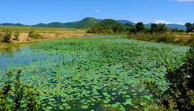 Countryside on summer day, wide lotus pond Stock Photography