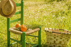 Countryside  summer holidays Stock Photography
