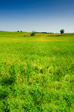 Countryside summer landscape Stock Photo