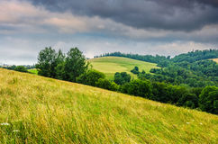 Countryside summer landscape with field, forest and mountain rid. Agricultural hay field in mountains. trees on the grassy meadow. beautiful countryside Stock Photo