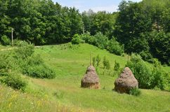 Two haystacks near forest. Countryside summer landscape with  green forest, hilly meadow and haystacks Stock Photo