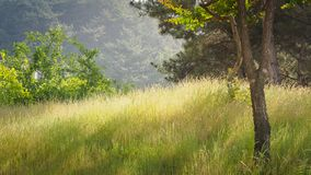 Countryside, Summer season. Countryside field, Summer season, Nature, background Stock Photo