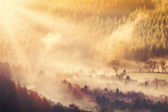Countryside sunrise and mist. British countryside coming to life on an early Spring morning, sunrise sun burning the mist from the meadows and trees Royalty Free Stock Photography