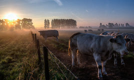 Countryside sunrise. Sunrise at countryside somewhere in Belgium Stock Photo