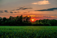 Countryside sunset Stock Images