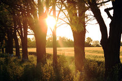 Countryside on sunset Royalty Free Stock Photos