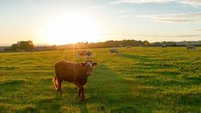 Countryside sunset Stock Photos