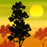 Countryside Sunset Shows Tree Trunk And Branch Royalty Free Stock Image