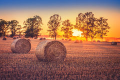 Sunset field Royalty Free Stock Image