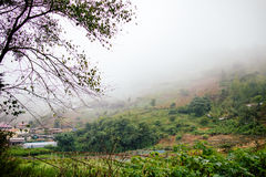 Countryside in thailand with misty fog Stock Photo