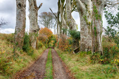 Countryside Track Royalty Free Stock Photography