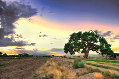 Countryside Tranquil Dusk. Royalty Free Stock Image