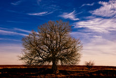 Countryside tree Royalty Free Stock Images
