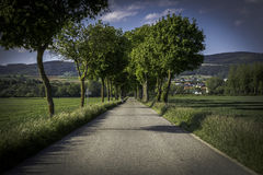 Countryside Tree Alley in Austria Royalty Free Stock Images