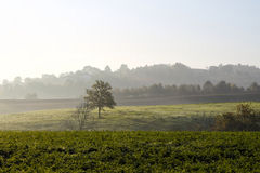 Countryside with tree in a field Royalty Free Stock Photography