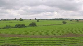 Countryside with trees and green fields seen from a moving train -. Countryside with trees and green fields seen from a moving train stock video footage