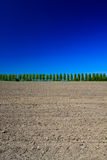 Countryside with trees, ground and sky. Countryside with trees, ground and blue sky Stock Images
