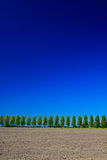 Countryside with trees, ground and sky. Countryside with trees, ground and blue sky Stock Image
