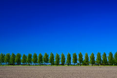 Countryside with trees, ground and sky Stock Photography