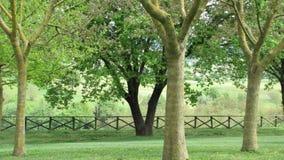 Countryside trees Stock Photo