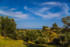 Countryside Trees. Shoot with canon 5d iii in Italy Royalty Free Stock Photography
