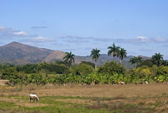 Countryside, Valley of the Ingenios, Cuba Royalty Free Stock Photography