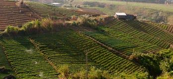 Countryside vegetable field at Kundasang, Sabah, Malaysia, Borneo Royalty Free Stock Photo