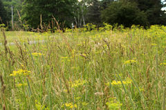 Countryside vegetation Stock Photos