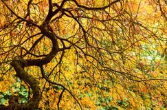Countryside vegetation. Country side during autumn generic vegetation Royalty Free Stock Image